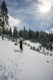 Skieur marchant par la neige près d'une forêt de sapin Image stock