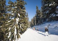 Skieurs sur la piste par des arbres Photos stock