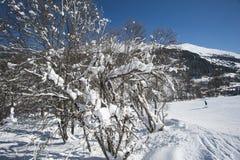 Skieurs sur la piste par des arbres Image stock