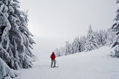 Skiing. A single skier in a red jacket in a snow covered foggy landscape Stock Photography
