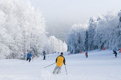 Skiing Royalty Free Stock Photos