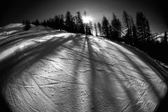 Skiing action 3 bw. Wintery skiing goodness. Slope with adjacent trees and slanting sun, casting large shadows Stock Images