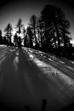 Skiing action 4 bw. Wintery skiing goodness. Slope with adjacent trees and slanting sun, casting large shadows Royalty Free Stock Photos