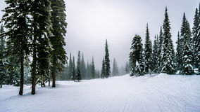 Skiing in the clouds and fog at the alpine village of Sun Peaks Royalty Free Stock Images