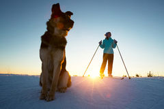 Skiing with the dog Royalty Free Stock Photography