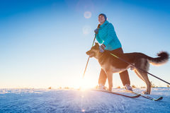 Skiing with the dog Stock Images