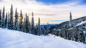 Skiing down the ski runs surrounded by snow covered trees in the winter landscape. Of the high alpine at the ski resort of Sun Peaks in the Shuswap Highlands of royalty free stock photos