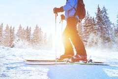 Skiing downhill, skier in winter forest stock photography