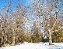 Skiing fields in West Virginia with picturesque background of forest trees. Royalty Free Stock Photo