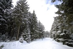 Skiing in forest royalty free stock images