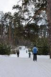 Skiing in forest Stock Photos