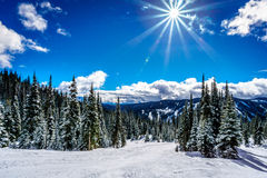 Skiing through the Forest under a Bright Sun and Blue skies Stock Images
