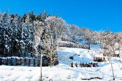Skiing at Gala-Yuzawa Royalty Free Stock Photo