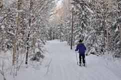 Skiing in nature Stock Photography