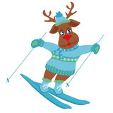 skiing reindeer Stock Photography