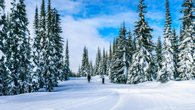 Skiing among Snow Covered Trees under blue skies Stock Photos