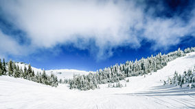 Skiing among Snow Covered Trees under blue skies Stock Photo