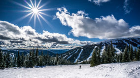 Skiing among Snow Covered Trees under bright sun Royalty Free Stock Photo