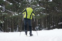 Skiing in the snow forest Royalty Free Stock Image