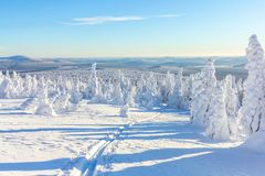 Skiing in the snow on a mountainside in the forest on a bright Sunny day in winter royalty free stock photography