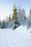 Skiing track and trees Royalty Free Stock Photography