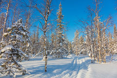 Skiing trail in beautiful winter forest landscape Stock Images