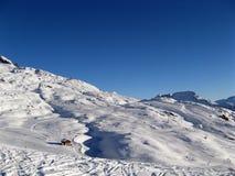 Skiing under blue sky Stock Photos
