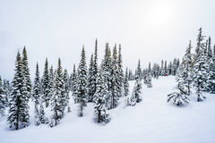 Skiing in a Winter Landscape in the High Alpine on the Hills surrounding the Alpine Village of Sun Peaks Stock Photography