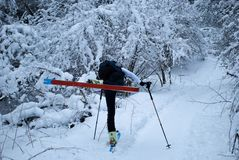 Skiing in the woods stock images