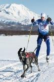 Skijor läuft auf Hintergrund von Kozelsky-Vulkan in Kamchatka Stockfoto