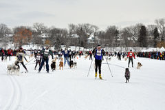 Skijor Loppet Royalty Free Stock Photography