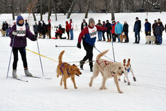 Skijor Loppet Royalty Free Stock Photo