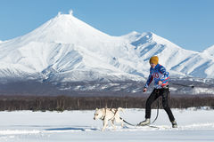 Skijor races on background of Avachinsky Volcano in Kamchatka. PETROPAVLOVSK, KAMCHATKA, RUSSIA - DEC 10, 2016: Skijoring - competition for Cup of Kamchatka Royalty Free Stock Image