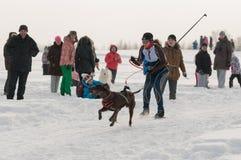 Skijoring stockfoto