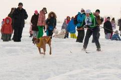 Skijoring lizenzfreie stockbilder