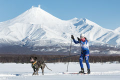 Skijoring auf Hintergrund von Avacha-Vulkan in Kamchatka Lizenzfreie Stockfotos
