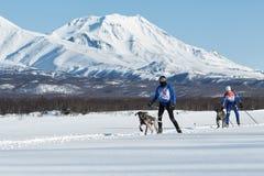 Skijoring auf Hintergrund von Kozelsky-Vulkan in Kamchatka Lizenzfreies Stockfoto