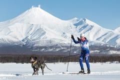 Skijoring on background of Avacha Volcano in Kamchatka. PETROPAVLOVSK, KAMCHATKA PENINSULA, RUSSIA - DEC 10, 2016: Skijoring - competition for Cup of Kamchatka Royalty Free Stock Photos