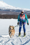Skijoring - competition for Cup of Kamchatka Region Royalty Free Stock Images
