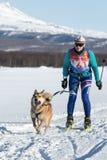 Skijoring - competition for Cup of Kamchatka Region. PETROPAVLOVSK-KAMCHATSKY, KAMCHATKA PENINSULA, RUSSIA - DEC 10, 2016: Kamchatka sportswoman skier-racer Royalty Free Stock Images