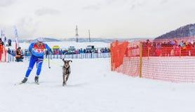 Skijoring - competition on Kamchatka on holiday. PETROPAVLOVSK, KAMCHATKA PENINSULA, RUSSIA - Mart 10, 2018: Winter sports festival.  Skijoring - competition on Stock Image