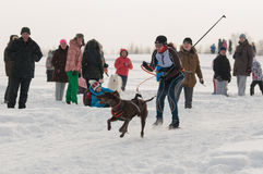 Skijoring. Competitions skijoring with a dog Stock Photo
