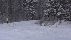 Skijoring in Karelian forest on stage of the World Cup stock footage