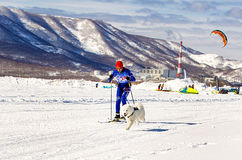 Skijoring man skiing runs with dog  in harness. Kamchatka, Russia - March 11, 2017:  Winter sports festival `Snowy Way` in Kamchatka. Skijoring man skiing runs Royalty Free Stock Photo