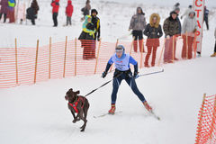 Skijoring. Monastyrshchino, Tula region, Russia - February 9, 2014: Competitors start the skijoring racing during Grand tour Kulikovo Pole. This annual racing Royalty Free Stock Photos