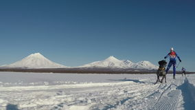 Skijoring på bakgrund av Kamchatka volcanoes