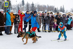 Skijoring in Russia. Volga Quest Sled dog race 2015. Ulyanovsk, Russia - February 15, 2015. Volga Quest Sled dog race 2015. The youngest participant with his Stock Photo