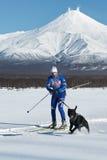 Skijoring-skijor läuft auf Hintergrund von Kamchatka-Vulkanen Lizenzfreie Stockbilder