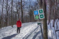 Skilanglauf Lizenzfreie Stockfotografie