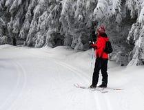 Skilanglauf Lizenzfreies Stockfoto
